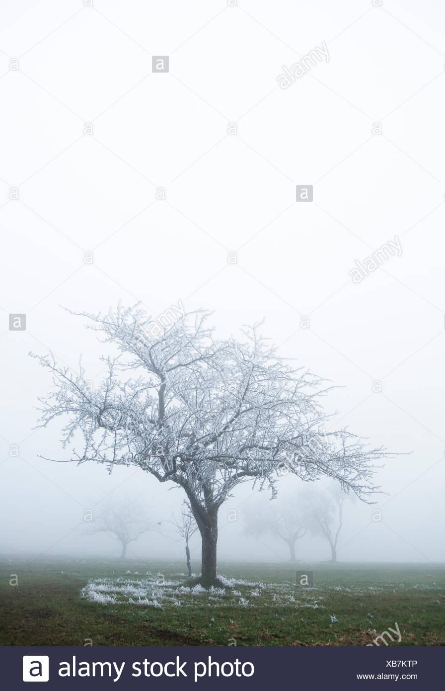 Wetter Herbstein morgen - wettercom
