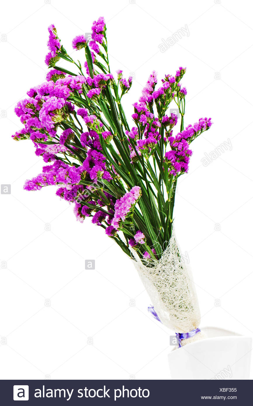 Bouquet from purple statice flowers in vase isolated on white bouquet from purple statice flowers in vase isolated on white background closeup mightylinksfo