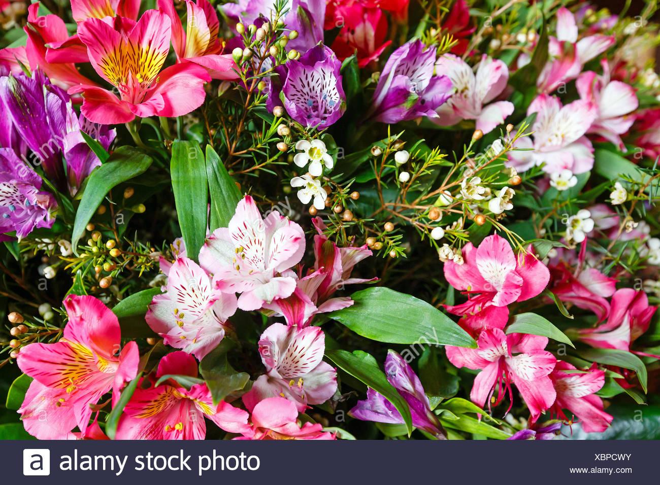 Big Multicolor Alstroemeria Flowers Bouquet Stock Photo 282620183