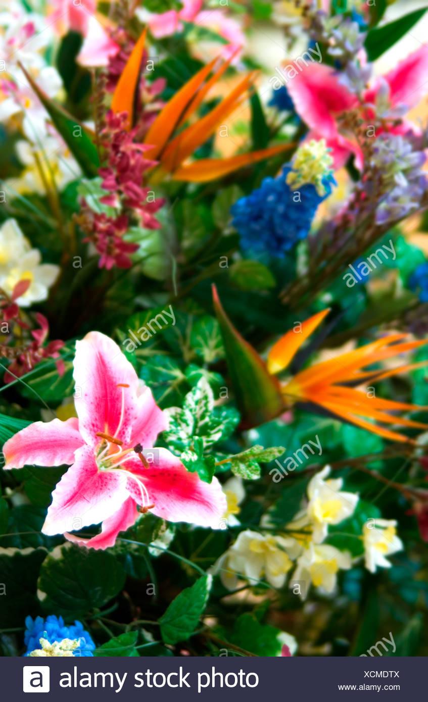 Tropical Flower Bouquet Pattern Stock Photo 283191690 Alamy