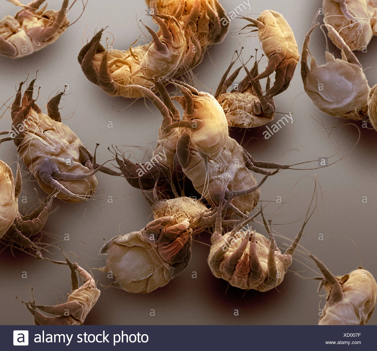 sarcoptic mange mites sem stock photo 283356627 alamy