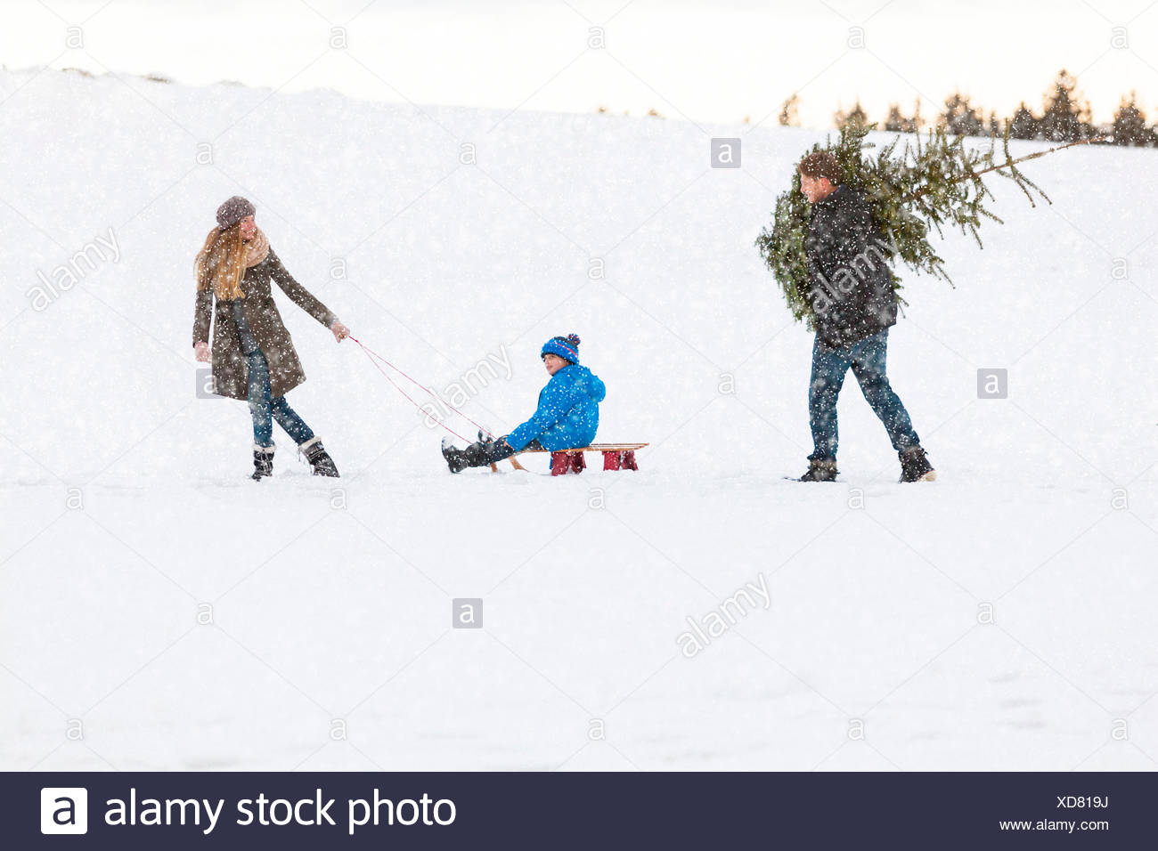 Family carries the perfect Christmas tree in snowy landscape Stock ...