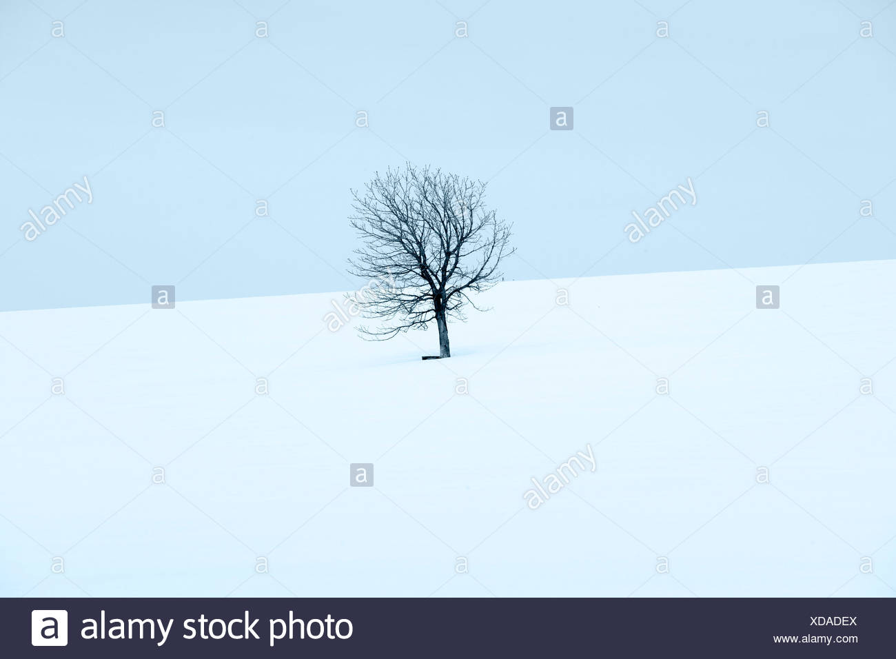 Winter Tree Field Agriculture Botany Color Colour Country ...