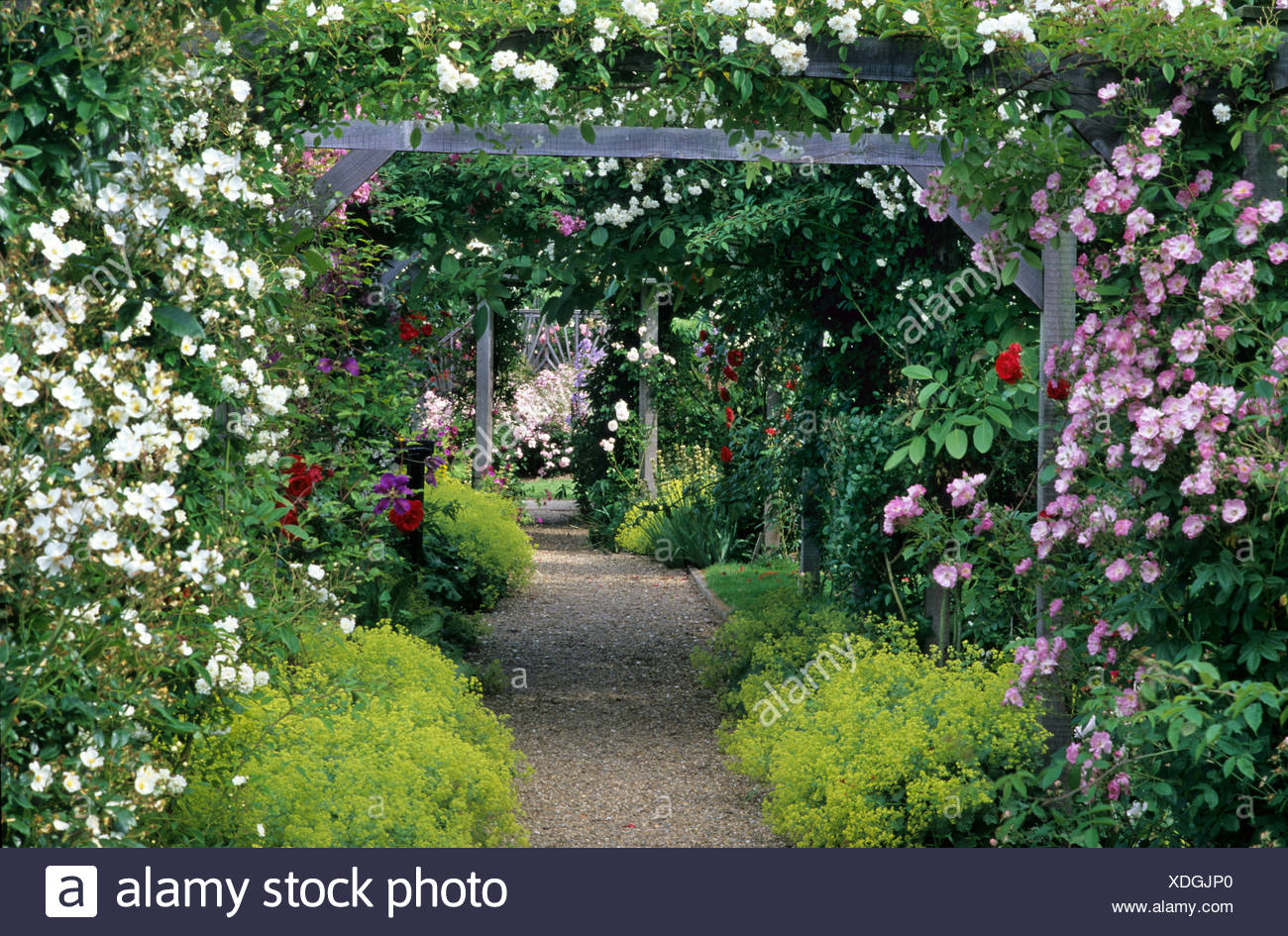 Mannington Hall, Norfolk, Rose Arbour, Wooden Garden Arch, Alchemilla  Mollis, Climbing Plants, Pink, White Flowers, Covered Path