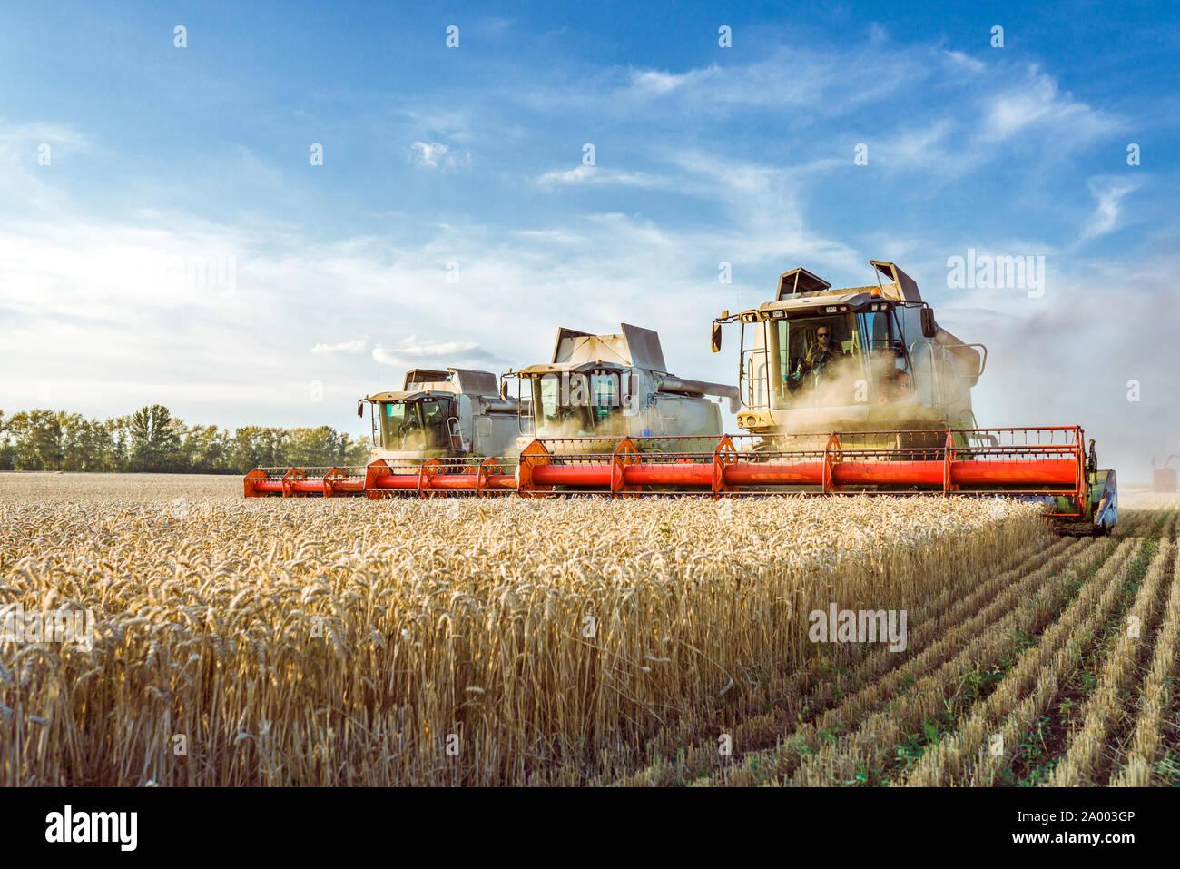 Vor dem Hintergrund eines sonnigen Sommertag und blauer Himmel mit Wolken. Mähdrescher ernten Reif goldene Weizen auf dem Feld. Das Bild der Stockfoto