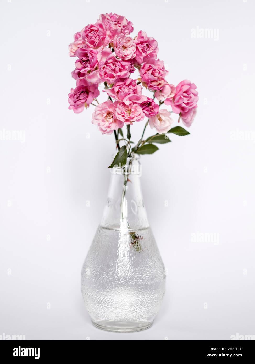 Rosa Rosen in einer Flasche vase Stockfoto