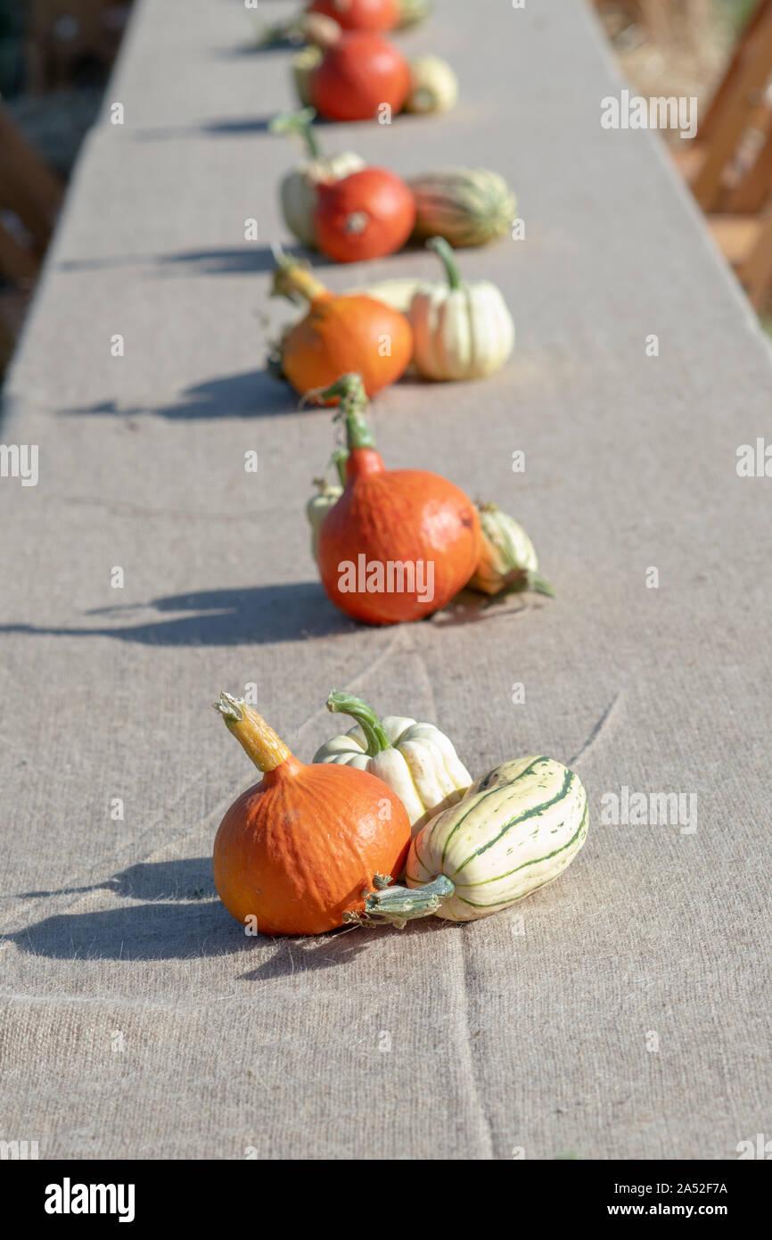 Kürbis, Kürbis und Squash Anzeige auf einem langen Tisch in Daylesford Organic Farm Shop Herbstfest. Daylesford, Cotswolds, Gloucestershire, England Stockfoto