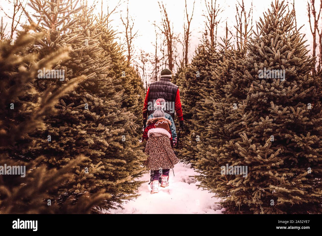 Kinder für den perfekten Weihnachtsbaum mit ihrem Vati Suche Stockfoto