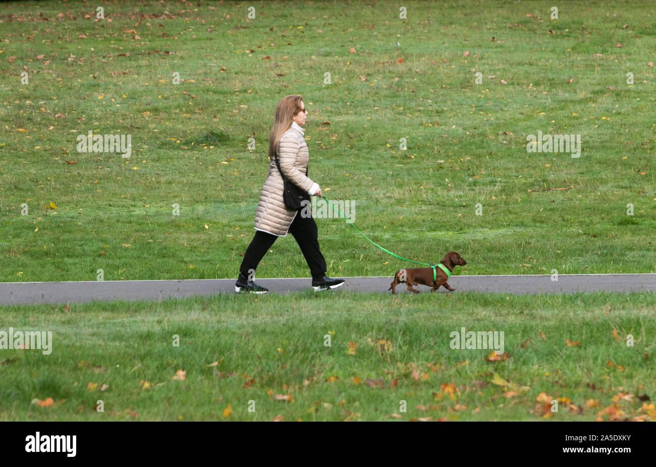 London, UK, 20. Oktober 2019. Eine Frau geht mit ihrem Hund auf Wimbledon Common an einem kalten Herbst Sonntag. Credit: Amer ghazzal/Alamy leben Nachrichten Stockfoto