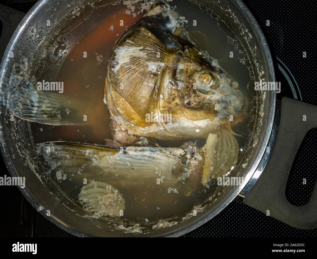 Eine gekochte Karpfen Kopf schwebt in Fisch Brühe in einen Kochtopf. Stockfoto