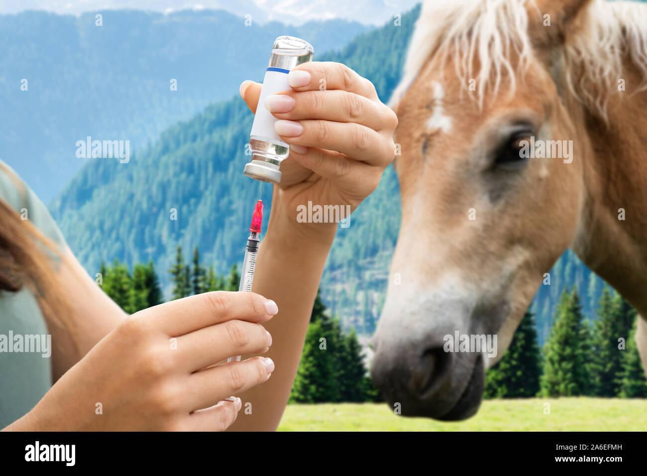 Auf pferd frau spritzt Cup of