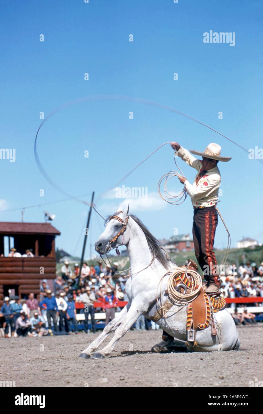 CALGARY, AB 9. JULI: Ein unbekannter Mann hat sein Pferd Knien wie er Seil Tricks bei der Calgary Stampede am 9. Juli 1954 in Calgary, Alberta, Kanada. (Foto von Hy Peskin) (Satz Anzahl: X1460) Stockfoto
