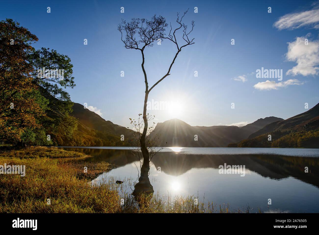 Ein einsamer Baum am Ufer des Buttermere Silhouette gegen den Himmel im Herbst Stockfoto
