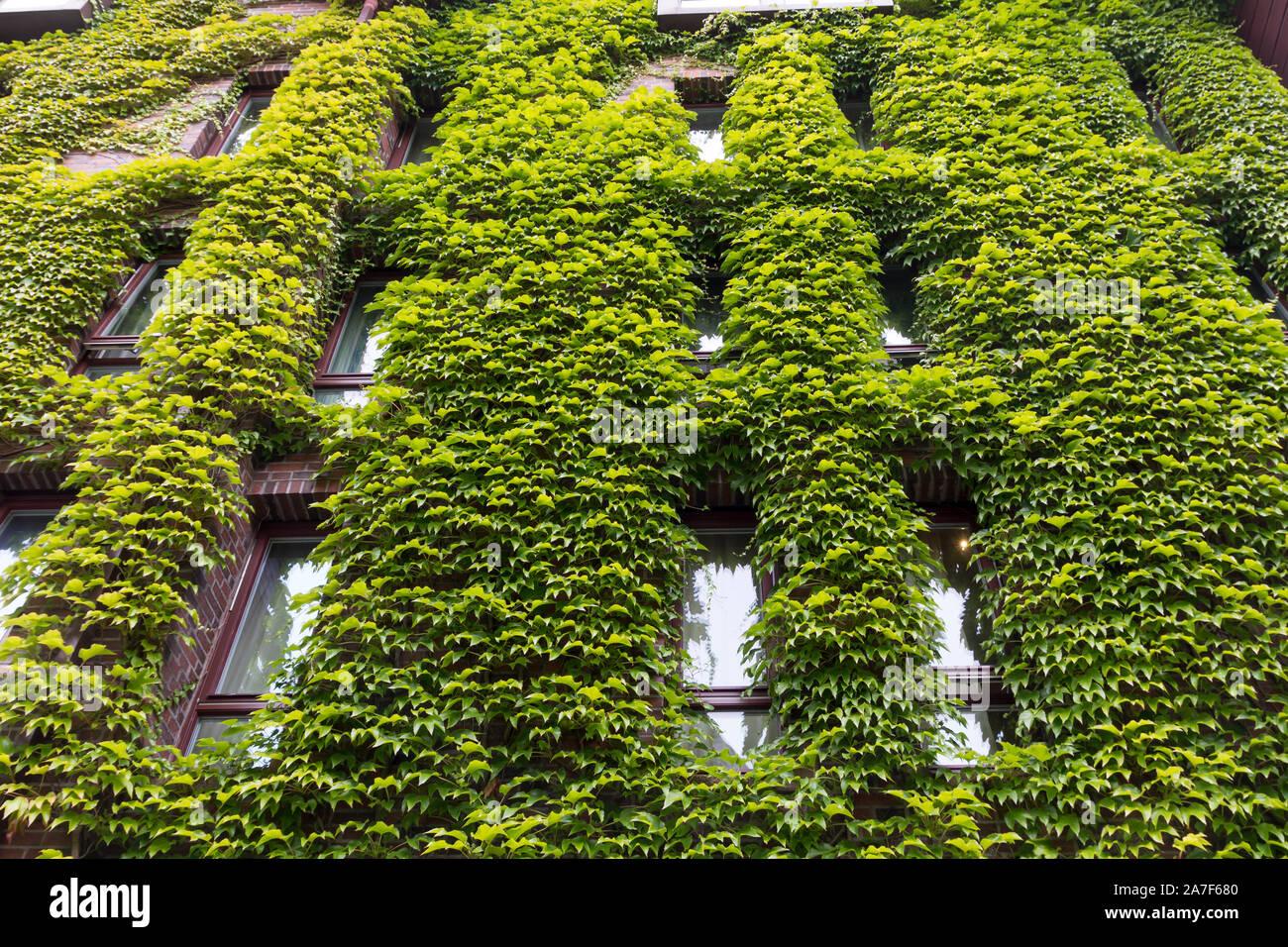 Grüne Wand in einer nachhaltigen eco Gebäude Stockfoto