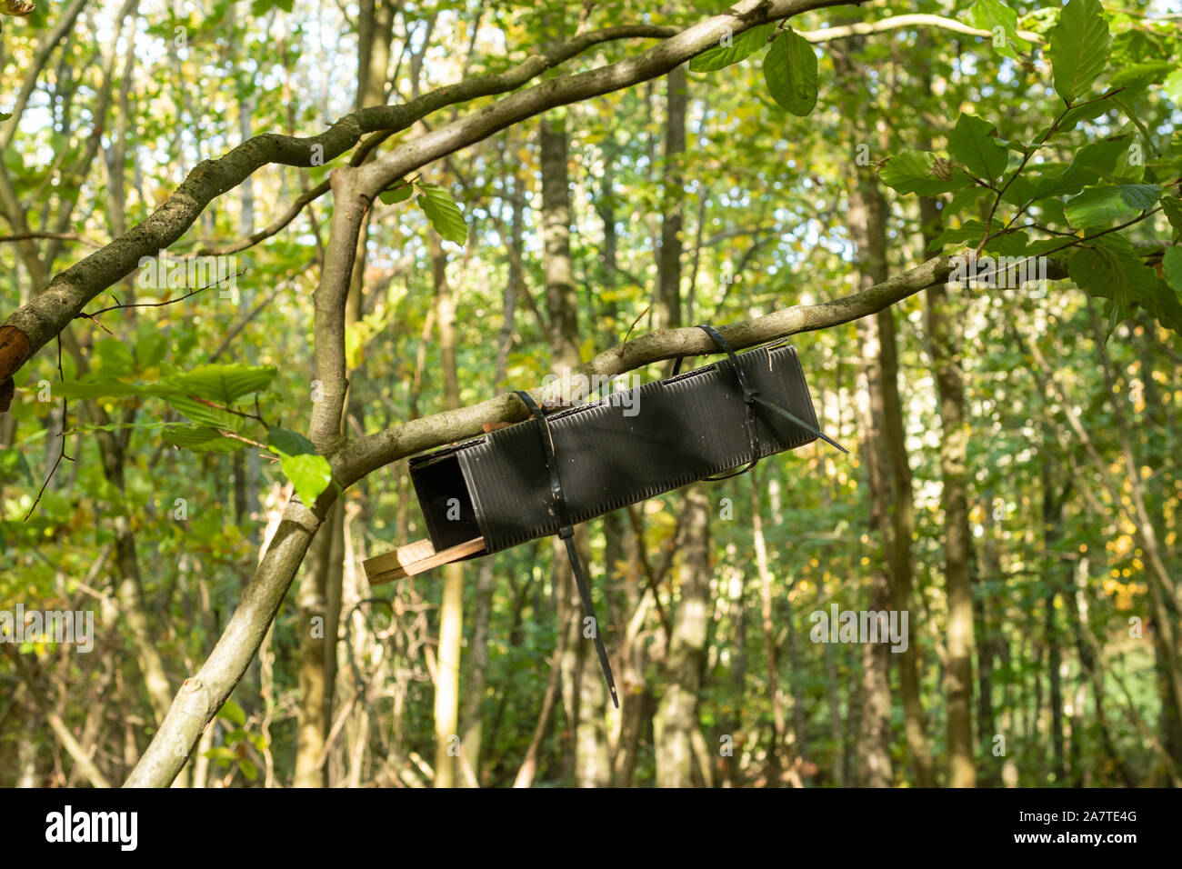 An Einem Baum Befestigt Stockfotos und bilder Kaufen Alamy