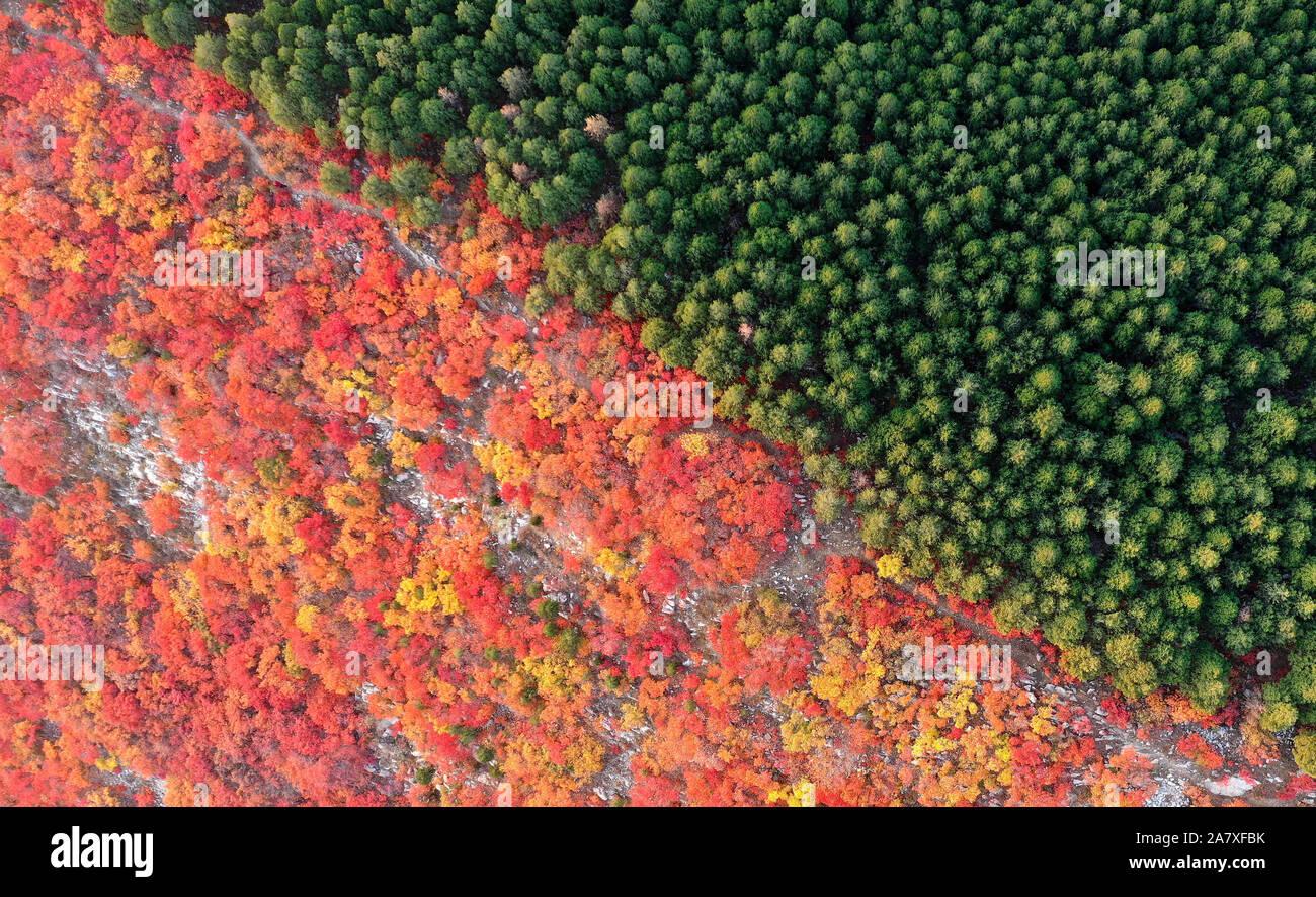 Jinan. 4 Nov, 2019. Luftaufnahme auf Nov. 4, 2019 zeigt die Landschaft des Xiezi Berg in Jinan, Provinz Shandong im Osten Chinas. Rauch Bäume und Pinien wachsen auf beiden Seiten der Kante hier präsentieren zwei Farben im Herbst Saison. Credit: Zhu Zheng/Xinhua/Alamy leben Nachrichten Stockfoto