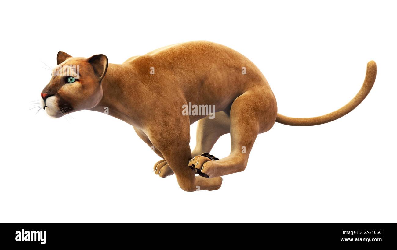 Leaping Puma Stockfotos & Leaping Puma Bilder Alamy