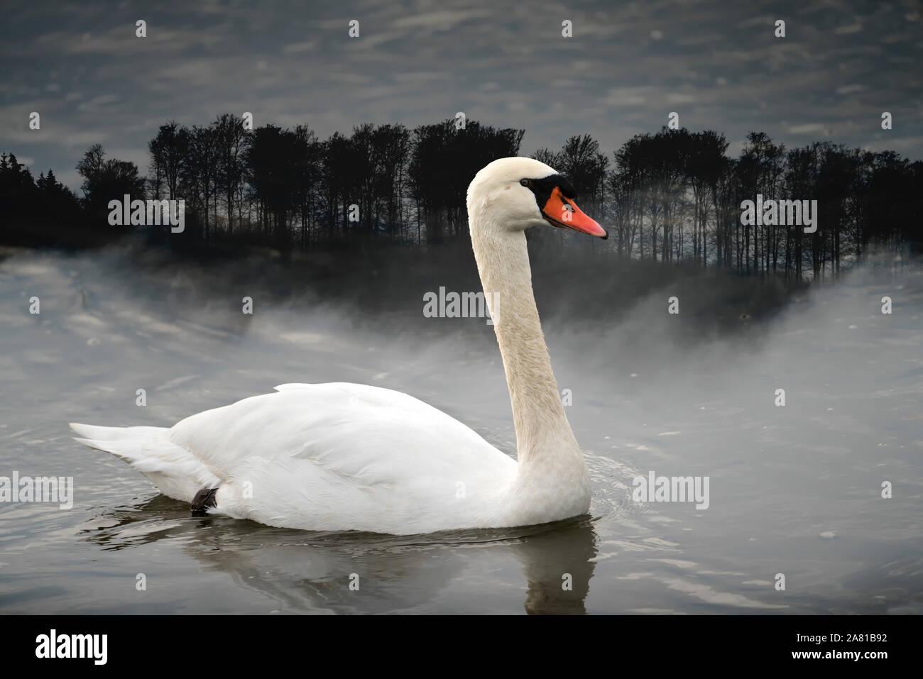Ein Schwan an der Weser, digital bearbeitet, Weserbergland, Nordrhein-Westfalen, Hessen, Deutschland Stockfoto