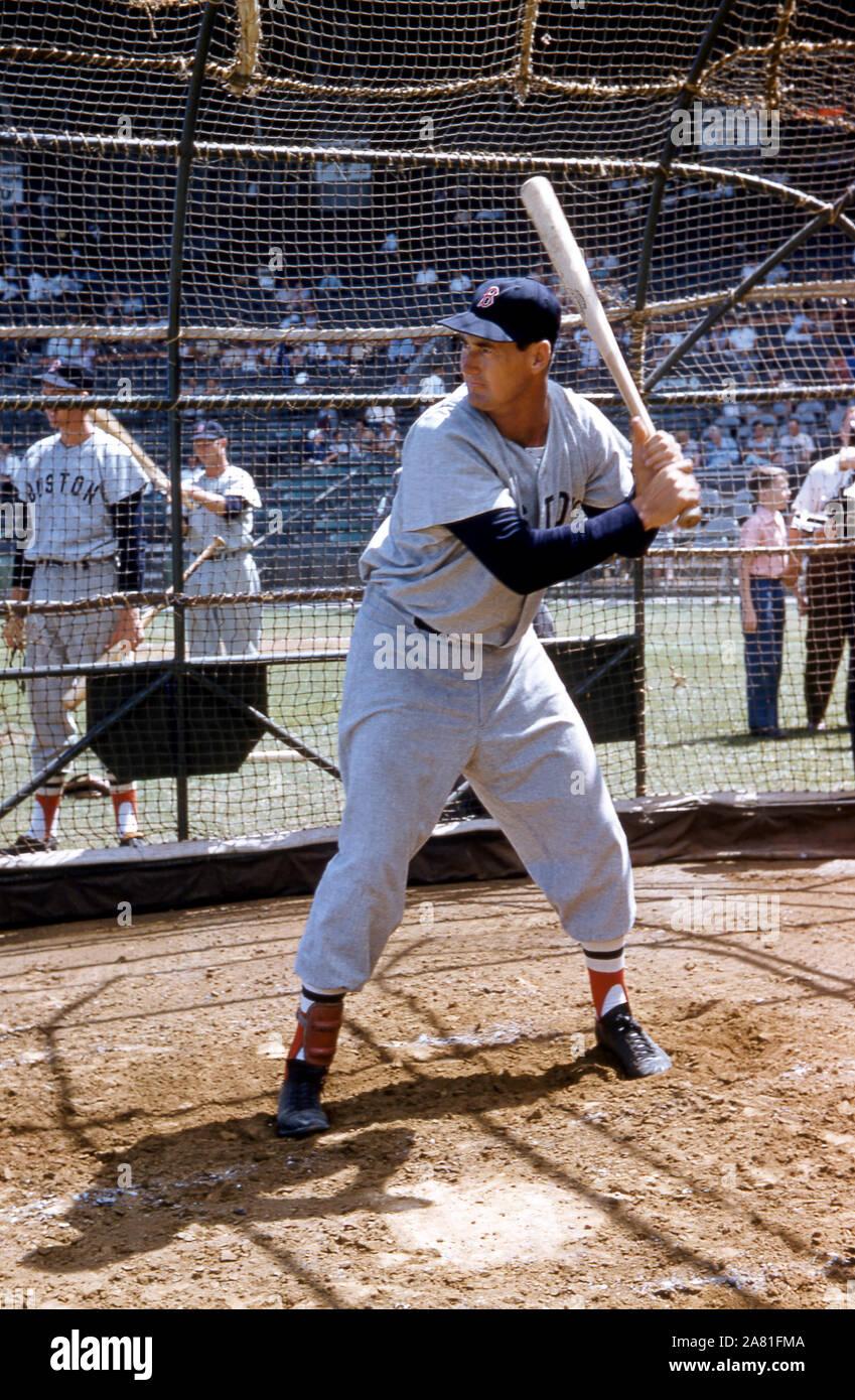 VERO Beach, FL - 18. März: Ted Williams #9 der Boston Red Sox nimmt schlagende Praxis vor eine MLB Spring Training gegen die Brooklyn Schwindler am 18. März in Vero Beach, Florida 1956. (Foto von Hy Peskin) (Satz Anzahl: X3619) Stockfoto