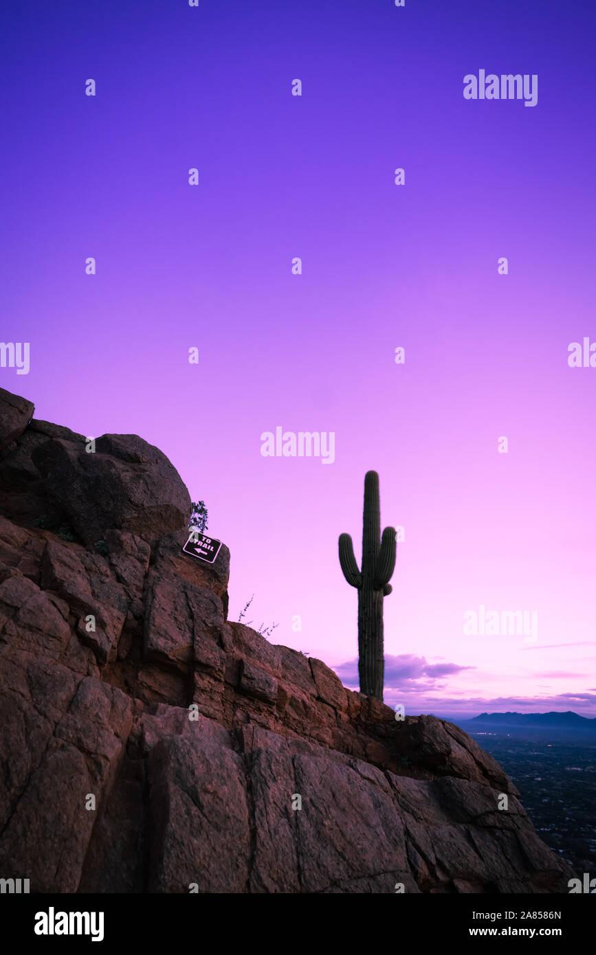 Wunderschöne Landschaft Silhouette von Lone Kaktus gegen purple sky Stockfoto