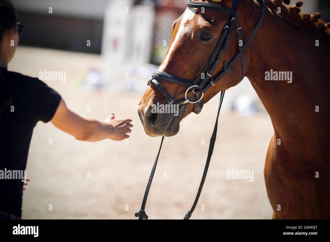 Pferd kommt in frau