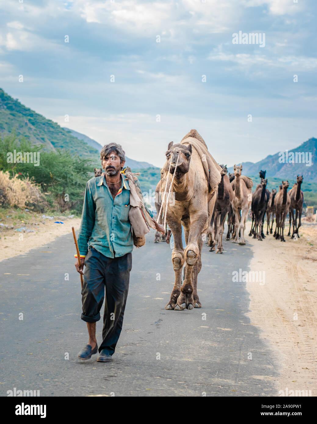 Kamelhändler, die mit seiner Karawane aus dem Wüstenwald zur jährlichen Kamelmesse in Puschkar, Rajasthan, zurückkehren. Stockfoto