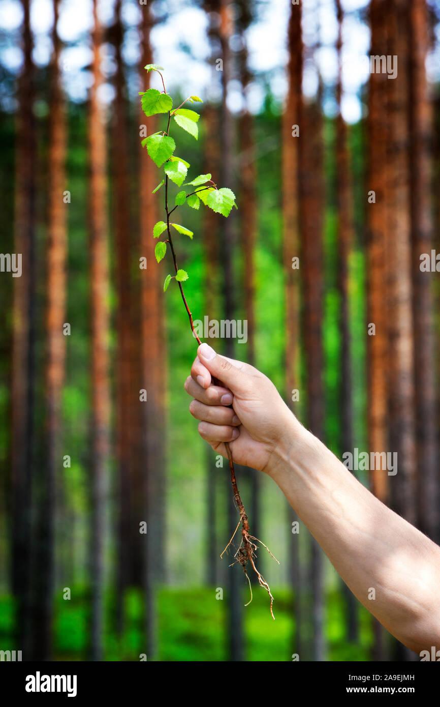 Entwurzelte Little Tree Stockfoto