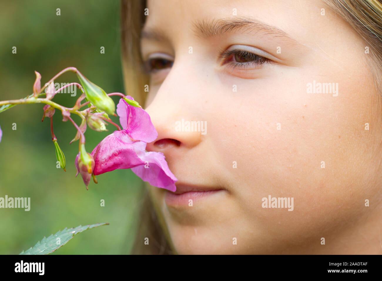 Impatiens glandulifera, Drüsiges Springkraut, Indisches Springkraut, Himalaya-Balsamine, Bauernorchidee, Familie der Balsaminengewächse (balsaminaceae) Stockfoto