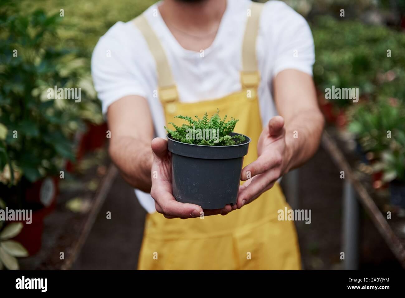 Die Konzentration auf ein kleines Stück der Natur. Mann hält die Vase im Gewächshaus und Pflanzen im Hintergrund Stockfoto