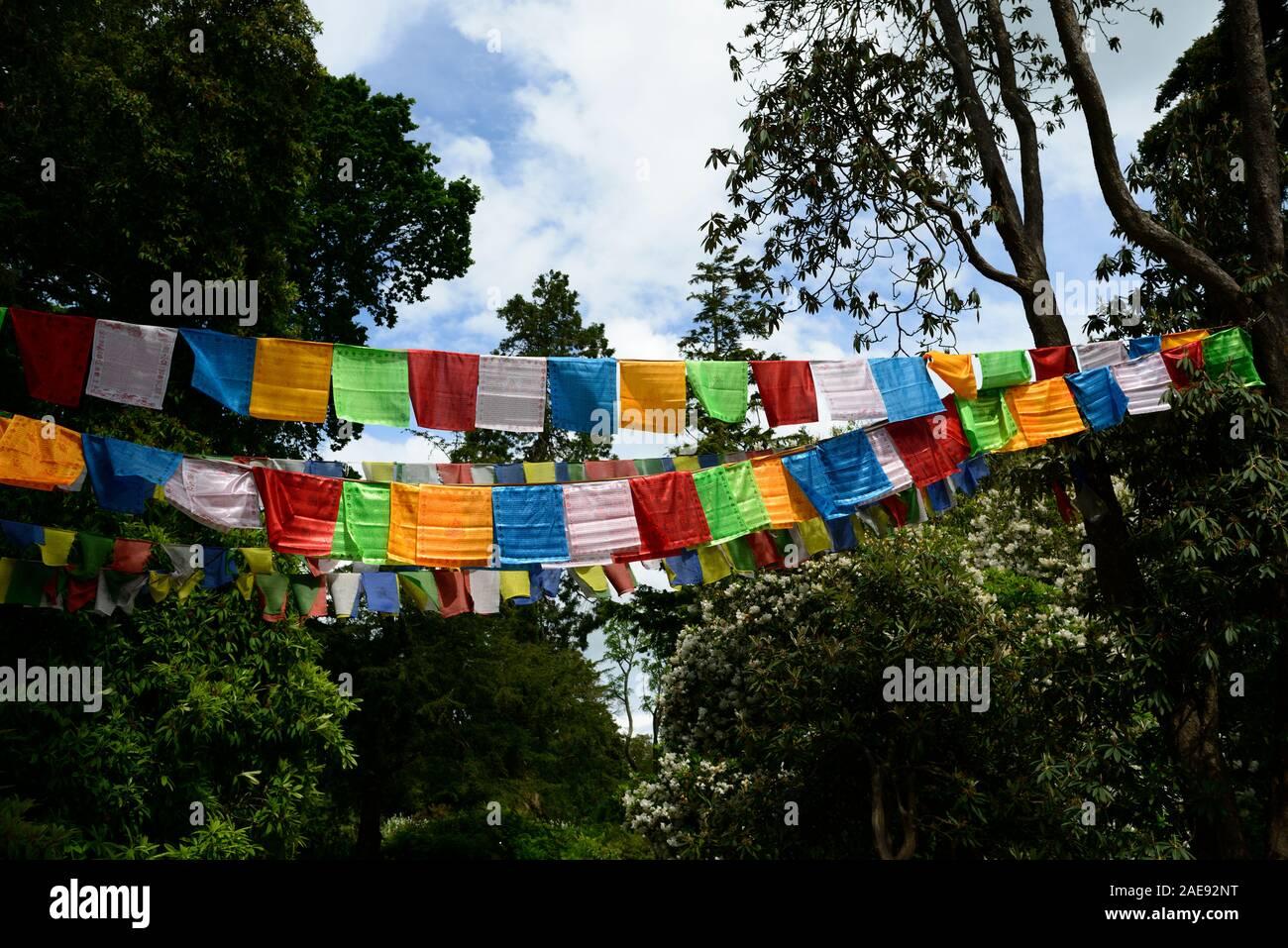 Tibetische Gebetsfahnen, Flagge, religiöses Symbol, Symbolik, symbolische, Garten, Gärten, Frieden, friedlich, RM Floral Stockfoto