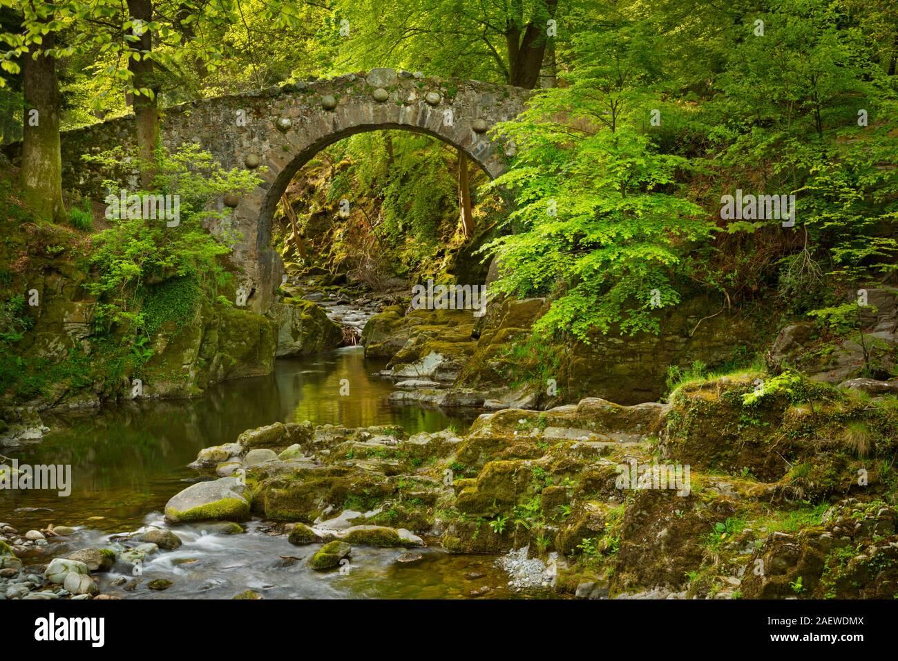 Foleys Brücke über den Shimna River in Tollymore Waldpark, Nordirland. Stockfoto