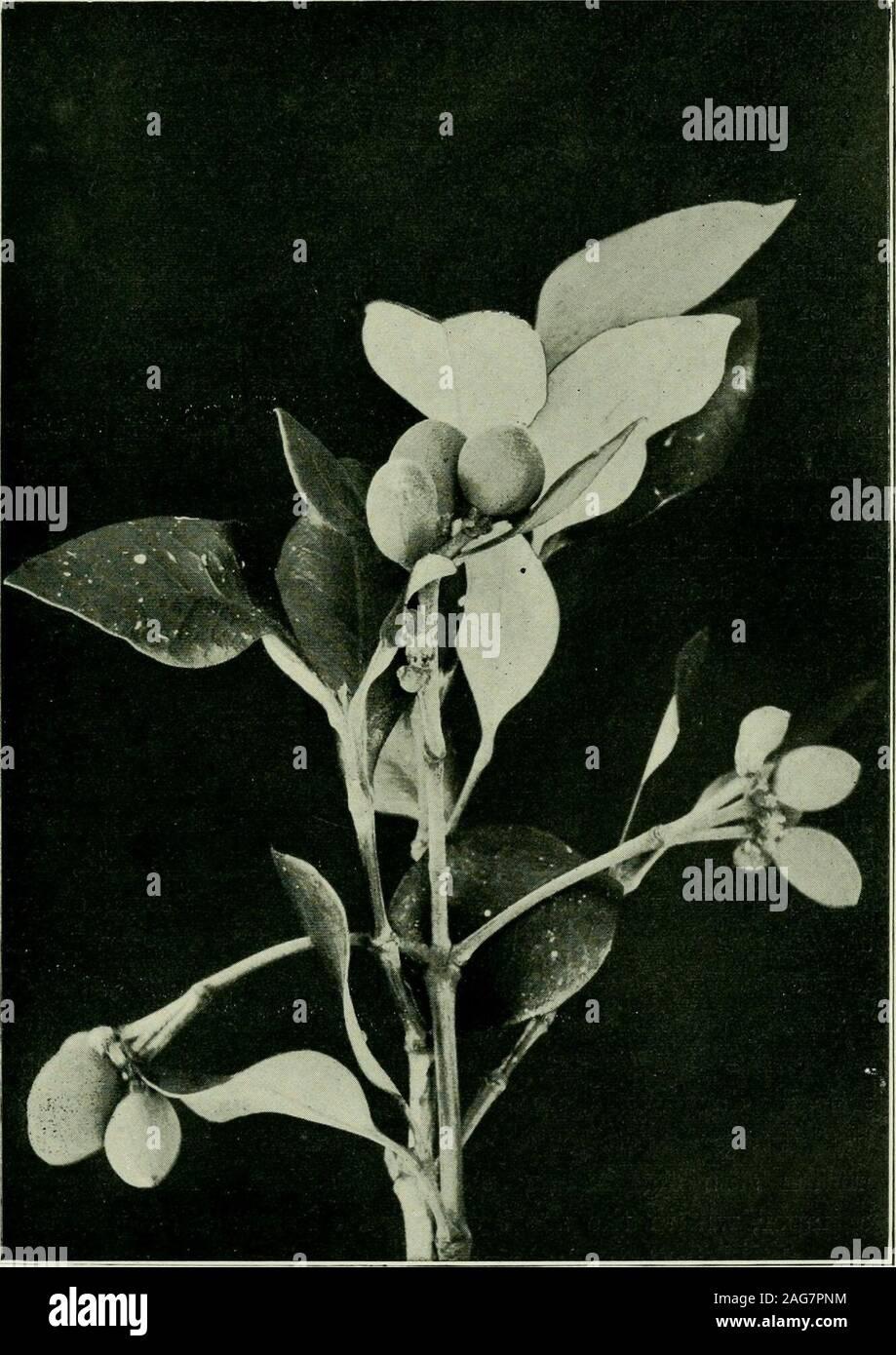 Garten Heftklammern U-förmig Pflanze Festsetzung Peg Anteil Gartenarbeit