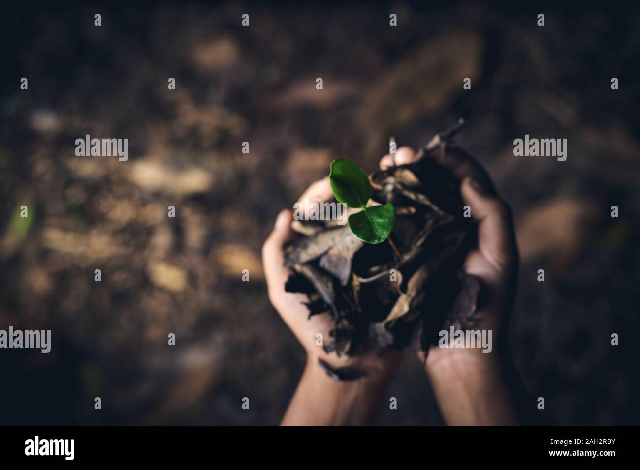Junge Hände halten junge Bäume für die Anpflanzung von der globalen Erwärmung zu reduzieren, der Erhaltung der Wälder Stockfoto
