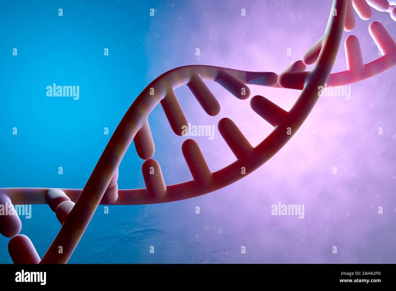 Dreidimensionales Rendern der DNA-Doppelhelix Stockfoto