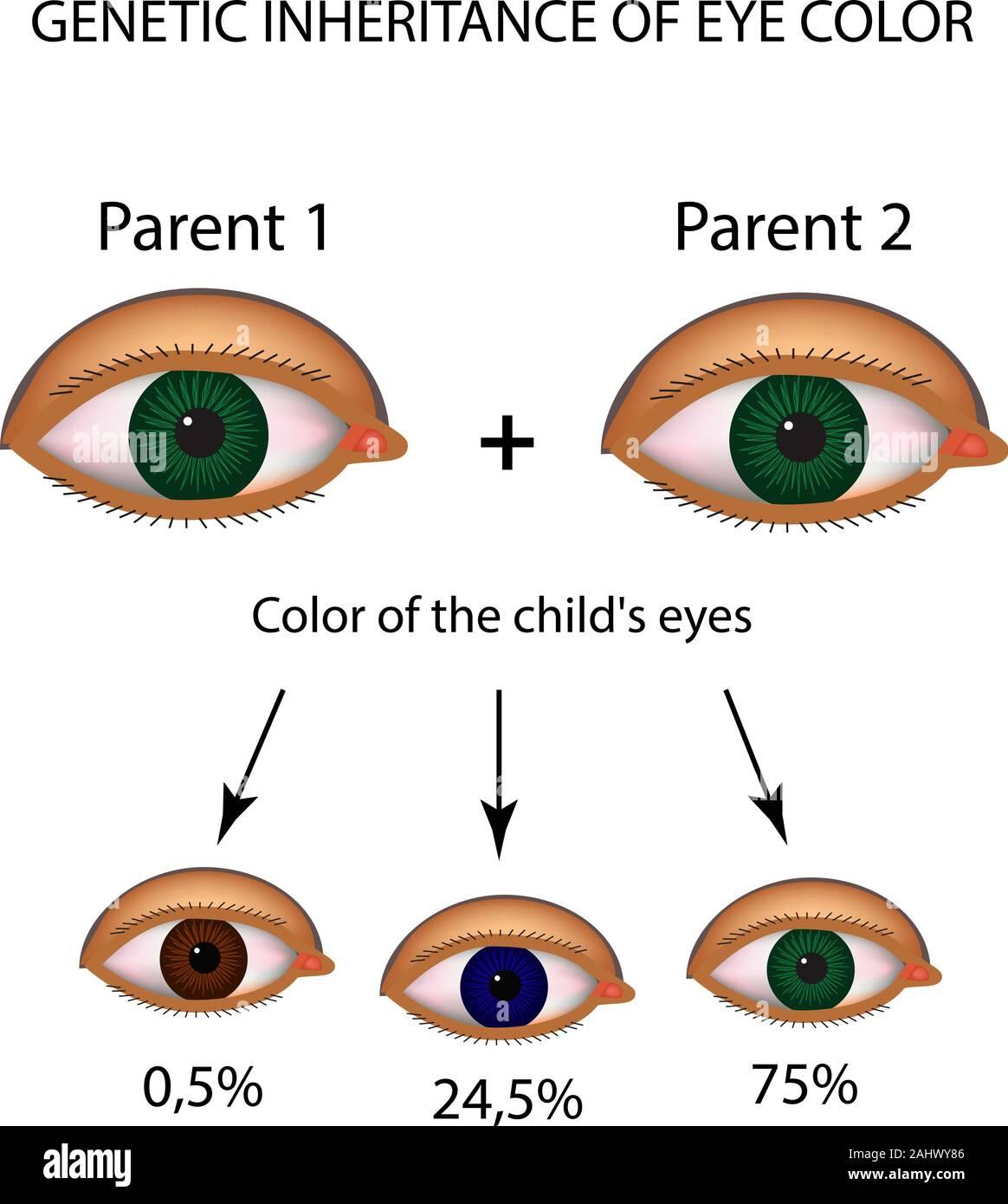 Prozent augenfarbe Seltene augenfarbe