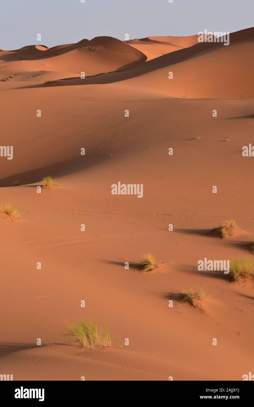 Die Hälfte - Licht der Morgendämmerung beleuchtet die immer bewegte Sand der Dünen von Erg Chebbi eine faszinierende Vielfalt an Farben, Merzouga, Marokko, Afrika. Stockfoto