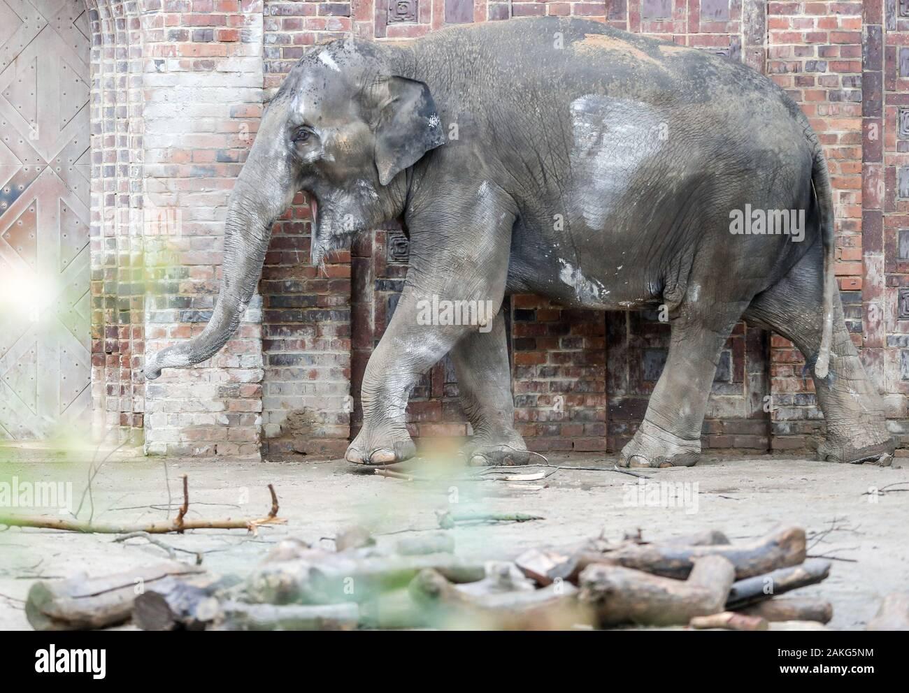 elefanten schwanger 2020