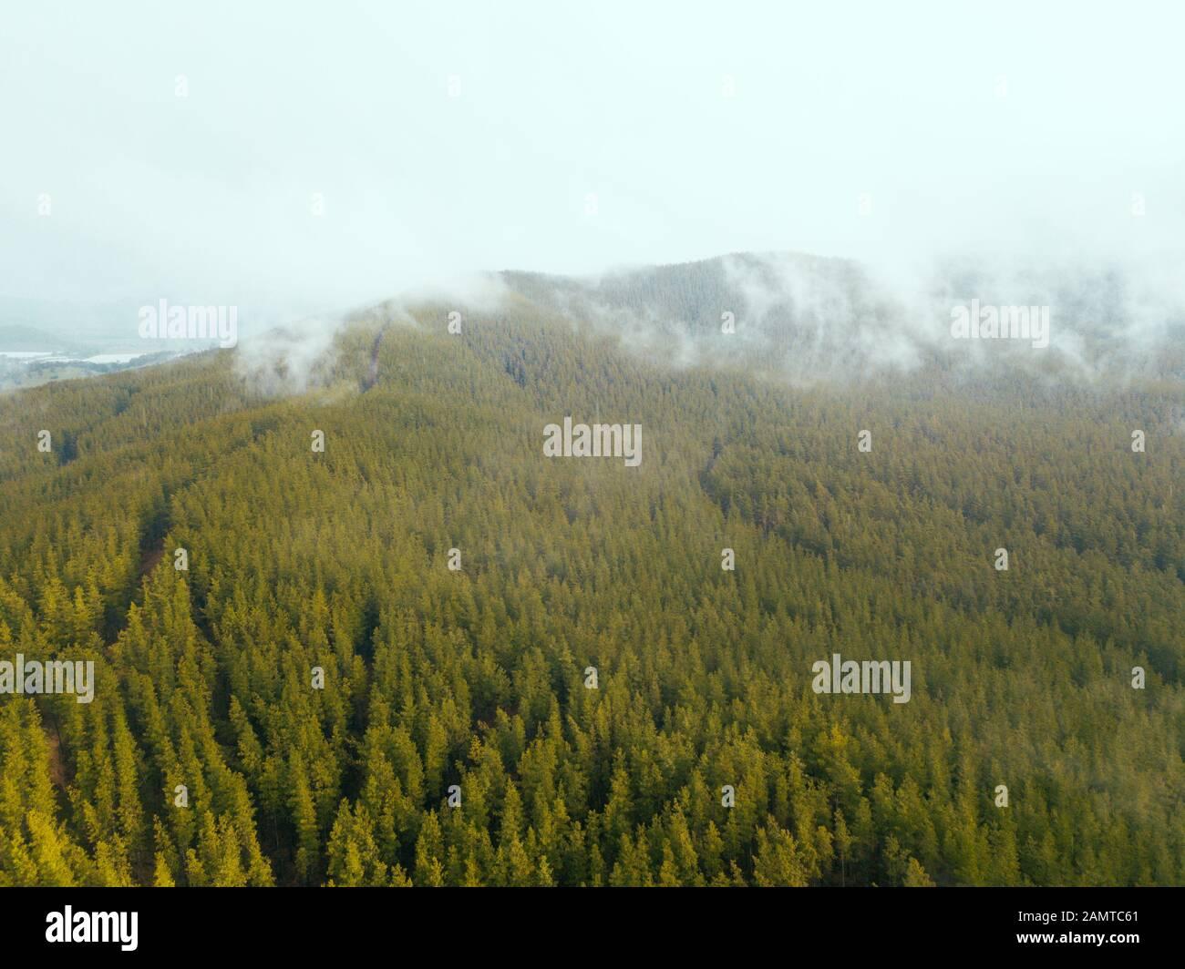 Nebel über einem Alpenwald, Mount Buffalo National Park, Myrtelford, Victoria, Australien Stockfoto