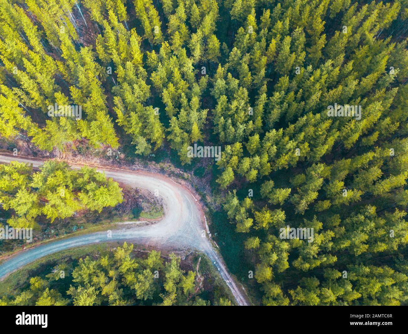 Luftaufnahme einer Straße durch einen Alpenwald, Mount Buffalo National Park, Myrtelford, Victoria, Australien Stockfoto