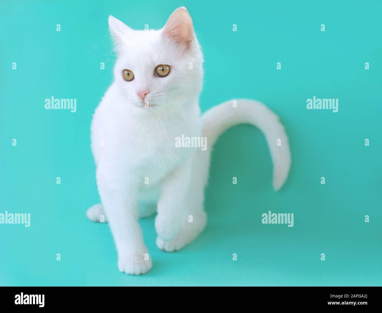 Haustier Allergie Stockfotos Und Bilder Kaufen Alamy