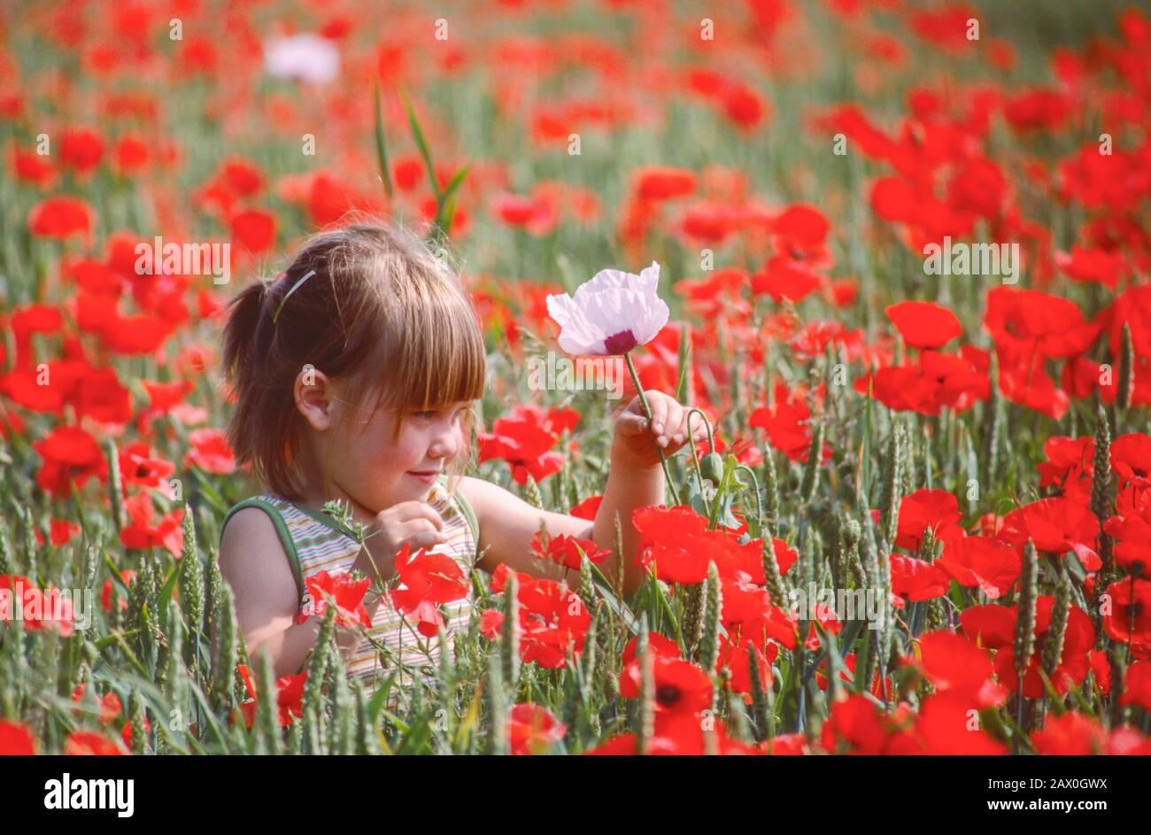 Junges Mädchen auf dem Feld der roten Mohn, das einen einzigen rosafarbenen Mohn hält Stockfoto