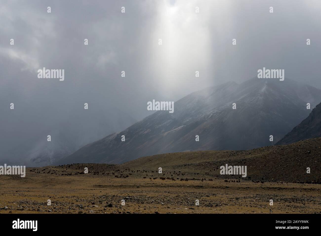 Schafe und Ziegen, die während Schnee und Niederschlägen im Hatuugeen-Tal im Altai-Gebirge in der Provinz Bayan-Ulgii im Westen der Mongolei weiden. Stockfoto