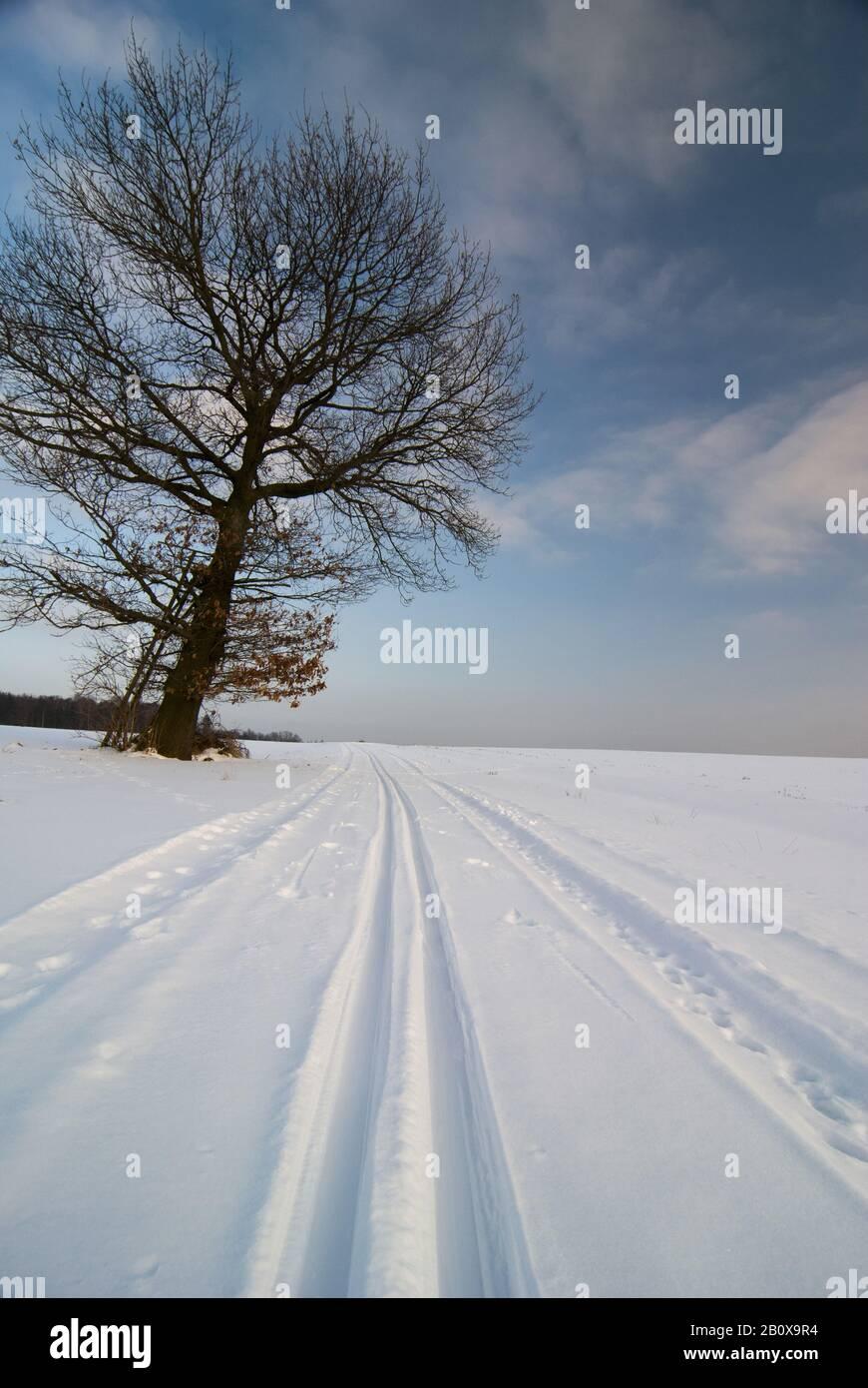 Loipen im Winter, neben einem Baum, Stockfoto
