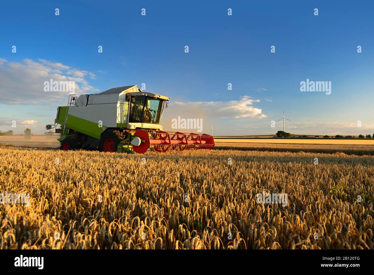 Getreideernte, Mähdrescher im Weizenfeld, Saalekreis, Sachsen-Anhalt, Deutschland Stockfoto