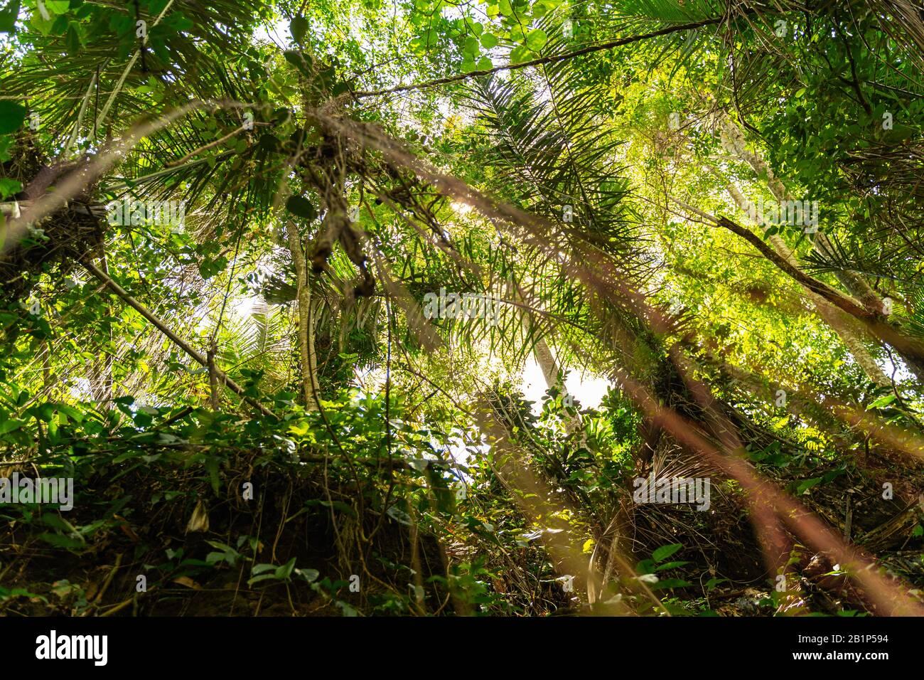 Nahaufnahme von Palmblättern, die im Vordergrund stehen Stockfoto
