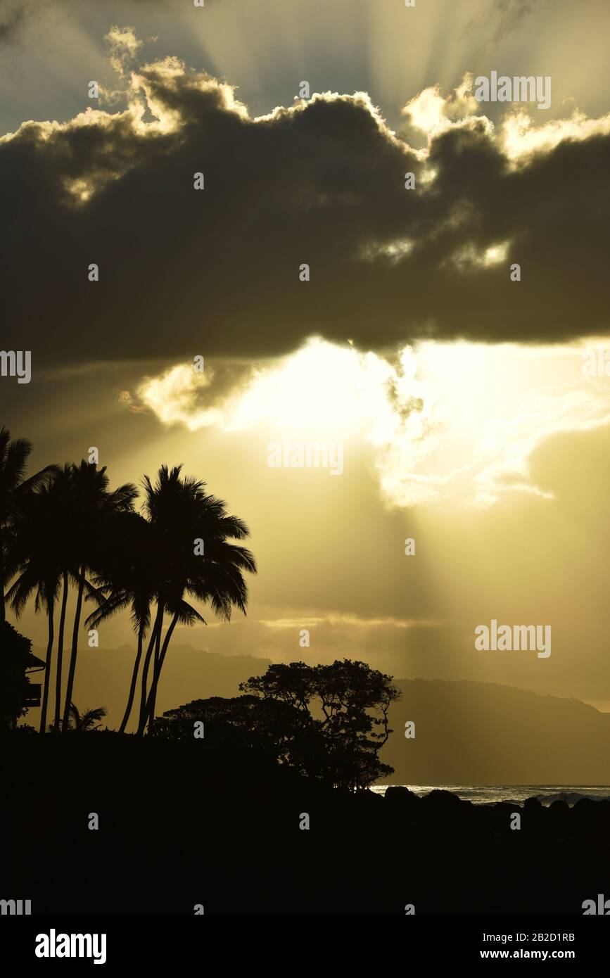 Dramatischer Sonnenuntergang, mit durchdringenden Wolken von Sonnenstrahlen, silhouettierten Palmen an der Küstenlinie am Nordufer von Oahu, Haleiwa, Hawaii, USA Stockfoto