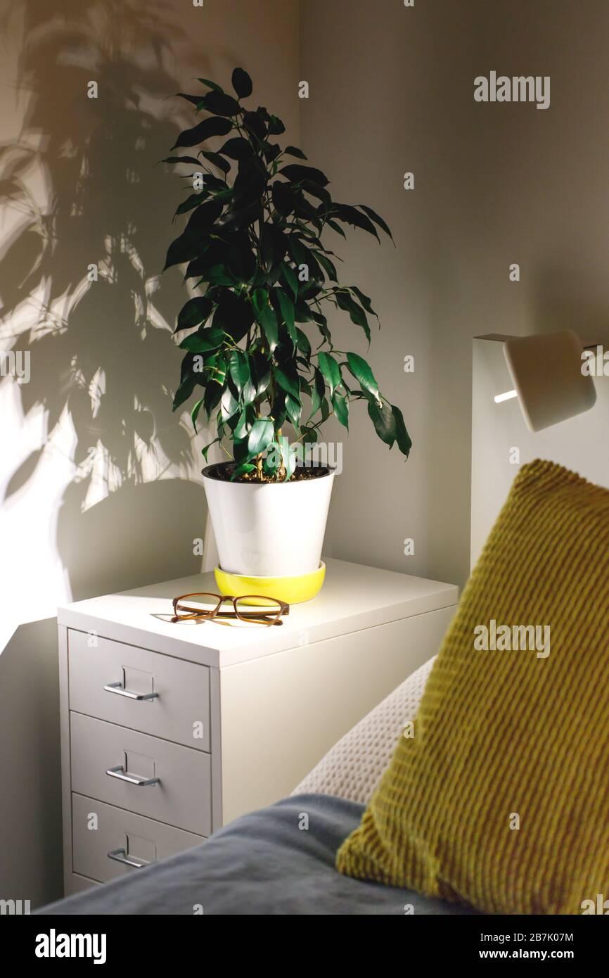 Ficus Benjamina Stockfotos und -bilder Kaufen - Seite 16 - Alamy