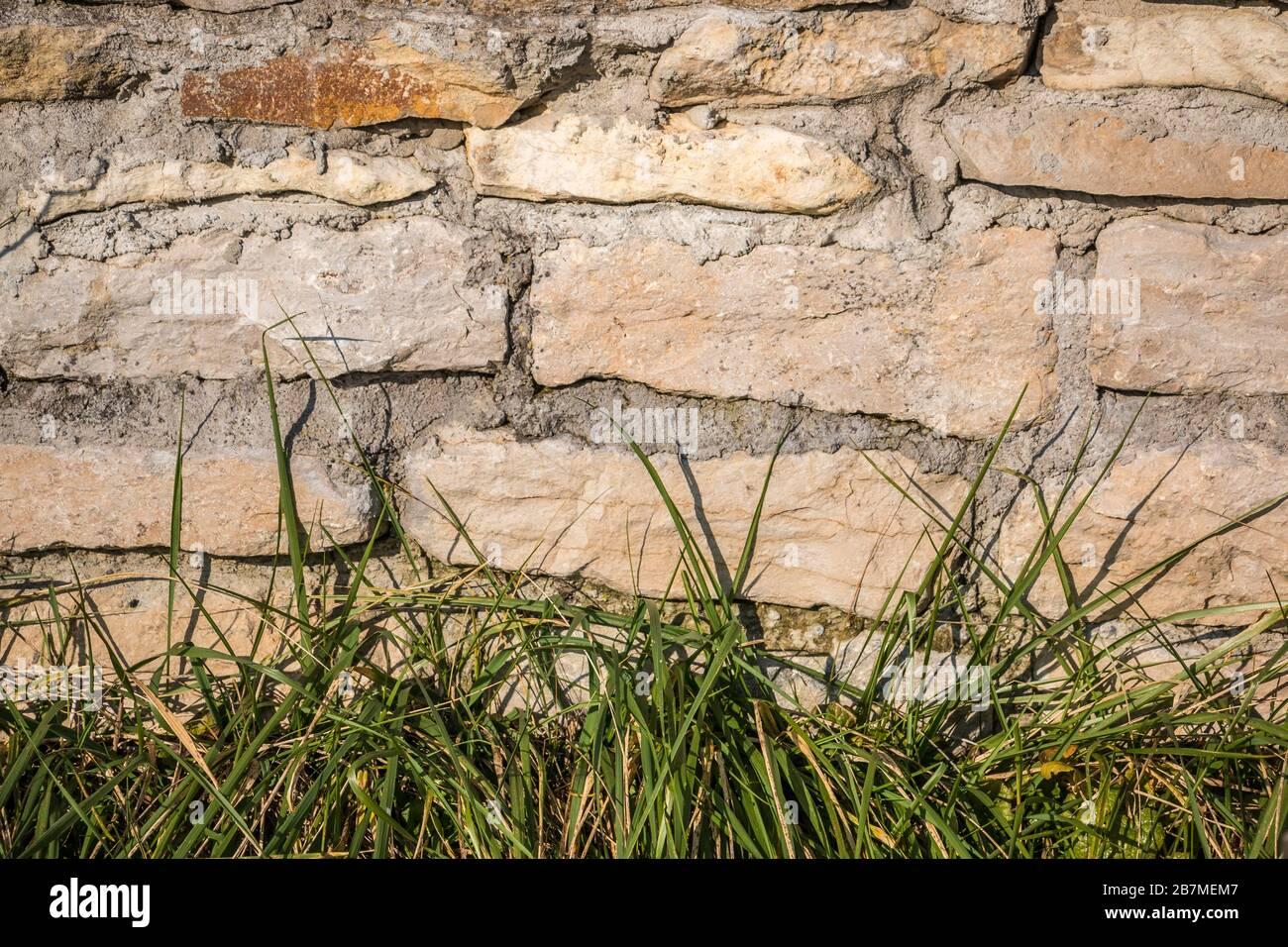 Große Steinmauer und grünes Gras im Garten Stockfoto