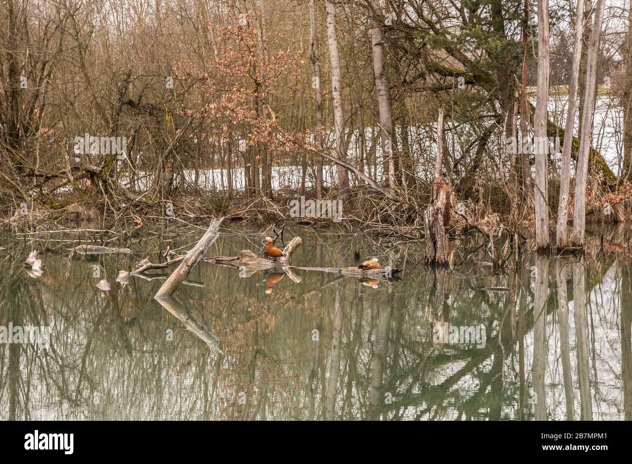 Wenig Wampland mit stagnierendem Wasser und durchbrochenen Bäumen Stockfoto