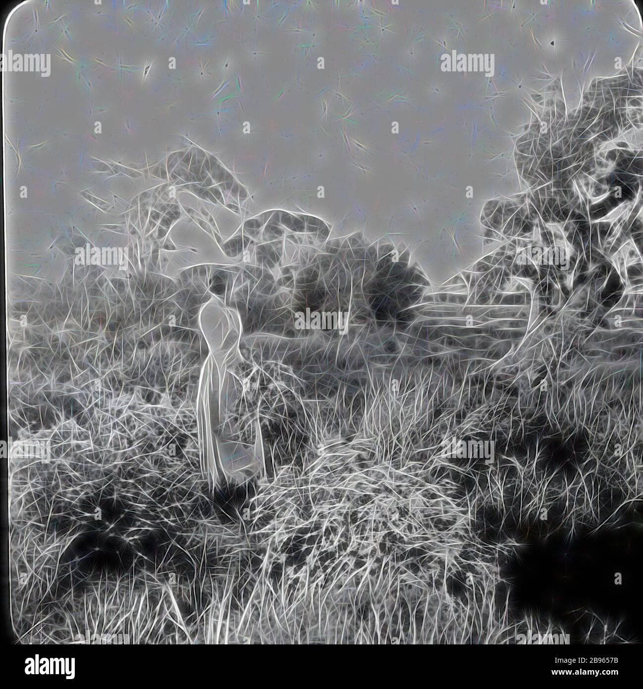 Laternenrutsche - Lady in Field Picking Wild Flowers, Aspendale, Victoria, um 1900, Schwarz-Weiß-Glas Laternenrutsche von Lady in einem Feld Kommissionierung Wildblumen, vermutet Elizabeth Campbell, Ehefrau des Fotografen A.J. Campbell. Dies ist eine der großen Bildersammlungen von A.J Campbell, die im A.J. gehalten wurden Campbell Collection by Museum Victoria., neu gestaltet von Gibon, Design von warmen fröhlich glühen von Helligkeit und Lichtstrahlen Ausstrahlung. Klassische Kunst neu erfunden mit einem modernen Twist. Fotografie inspiriert von Futurismus, umarmt dynamische Energie der modernen Technologie, Bewegung, Geschwindigkeit und revolut Stockfoto